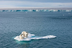 climate change, polar bear