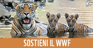 banner Sostieni il WWF per global elements homepage