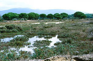 Oasi di Orbetello in Toscana, gestita da WWF Italia.